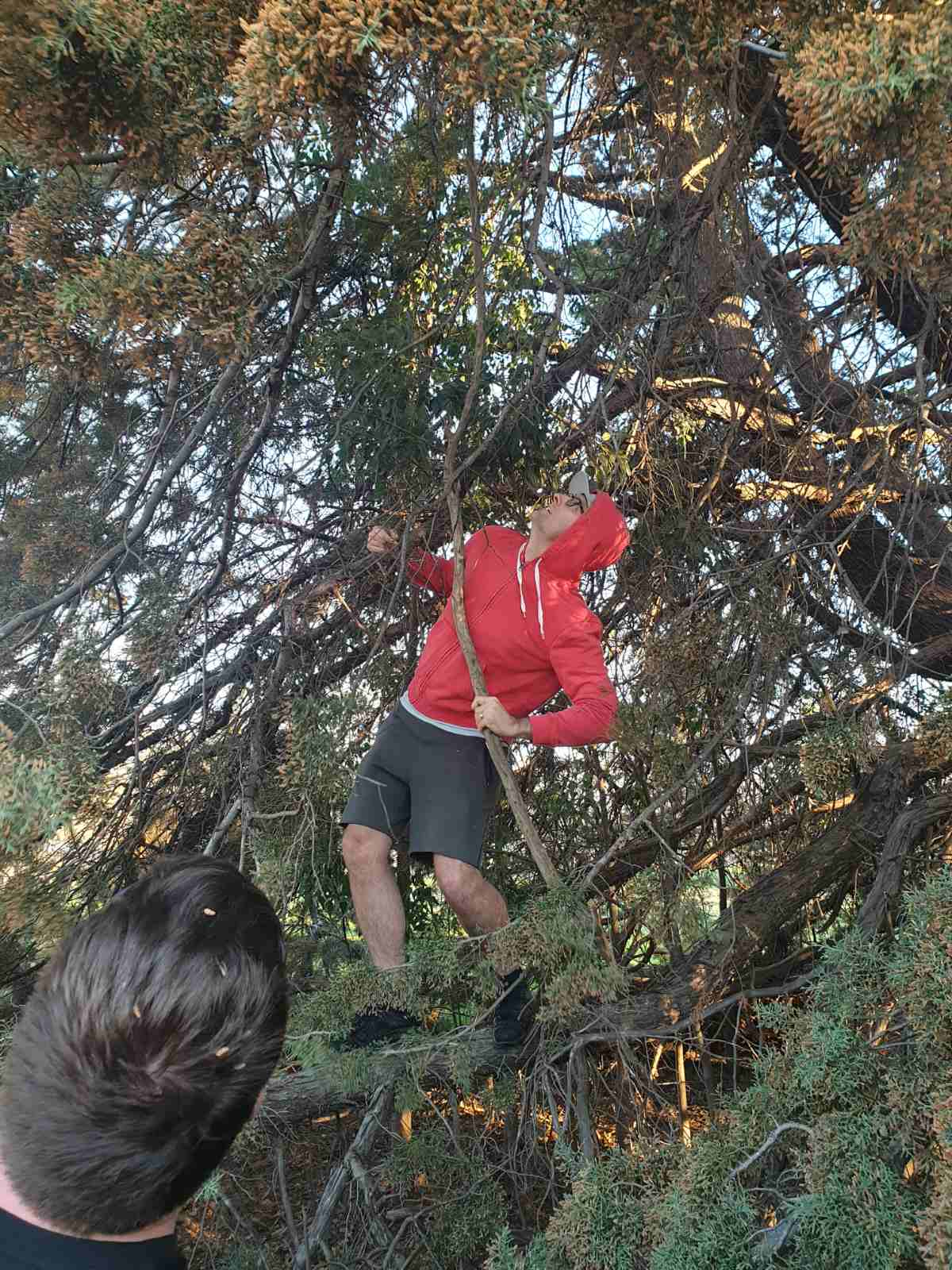 Me getting disc out of tree